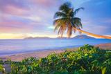 Palm Tree on Pinney's Beach Fotoprint