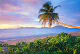 Palm Tree on Pinney's Beach Photographic Print
