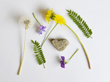 Collection of Wildflowers, Ferns and Heart Shaped Rock Photographic Print by  Demelzaandreoli