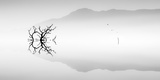 Silhouette of Tree on Misty Lake Photographic Print by Juanluis Duran