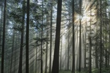 Sunrays Shining Through Fogged Out Forest Photographic Print by Matthias Wassermann