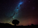 Silhouette of a Tree Against Milky Way, Chile Photographic Print by  Jean_De_Heeckeren