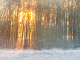 Forest in Winter with Bright Sunlight Photographic Print by Mikael Svensson