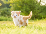 Little Kittens Photographic Print by Paul Watzlaw