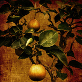 A Bonsai Pear Tree with Two Fruit Against a Rich, Gold Craquelure Background Photographic Print by Tim Kahane