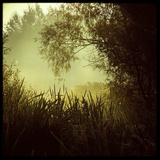 A Misty Scene across Reeds Photographic Print by Tim Kahane