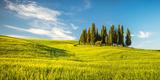 Tuscany at Spring Photographic Print by Sergey Borisov