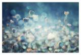 Diamonds Print by Stefan Eisele