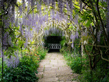 Wisteria Archway in the Formal Garden at Waterperry Gardens, Oxfordshire, England Photographic Print by Tim Gainey