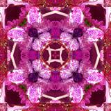 A Floral Mandala Montage Photographic Print by Tim Kahane
