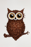 Coffee Owl Photographic Print by Paul Watzlaw