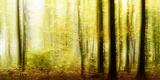 Klaus-Peter Wolf - Deciduous Forest in Autumn, Abstract - Fotografik Baskı