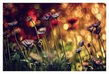 Untitled Prints by Dimitar Lazarov