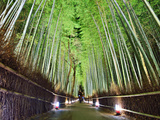 The Bamboo Forest of Kyoto, Japan Photographic Print by Sean Pavone