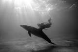 A Black and White Image of a Bottlenose Dolphin and Snorkeller Interacting Contre-Jour Fotografie-Druck von Paul Springett
