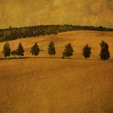 A Countryside View with a Row of Trees Photographic Print by Tim Kahane