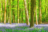 Spring Bluebell Photographic Print by Robert Maynard