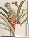 Pineapple (Ananas) with Surinam Insects Poster by Maria Sibylla Merian