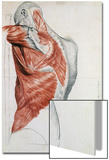 Human Anatomy, Muscles of the Torso and Shoulder Posters by Pierre Jean David d'Angers