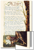 'The Tyger', Plate 41 from 'Songs of Experience', 1794 Posters by William Blake