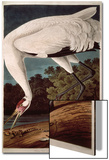 "Whooping Crane, from ""Birds of America"" Prints by John James Audubon"