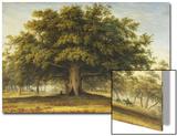 The Beggars Oak Print by John Glover
