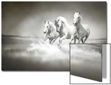 Herd Of White Horses Running Through Water Posters by  varijanta