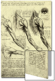 Studies of Human Arm Prints by  Leonardo da Vinci