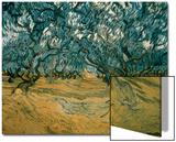 Olivenbäume Kunstdruck von Vincent van Gogh