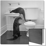 Otters Playing in Bathroom Print by Wallace Kirkland