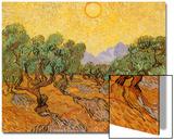 Sun over Olive Grove, 1889 Affiches par Vincent van Gogh