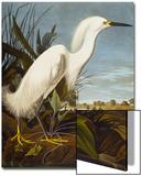Snowy Heron or White Egret / Snowy Egret (Egretta Thula), Plate CCKLII, from 'The Birds of America' Affiches par John James Audubon