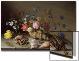 Flowers, Shells and Insects on a Stone Ledge Prints by Balthasar van der Ast