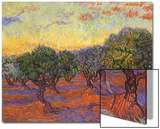 Grove of Olive Trees, 1889 Prints by Vincent van Gogh