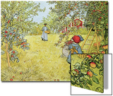The Apple Harvest Posters by Carl Larsson