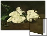 Branch of White Peonies and Secateurs, 1864 Kunstdrucke von Édouard Manet