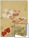 Mohnblumen Kunstdrucke von Yun Shouping