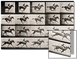 "Jockey on a Galloping Horse, Plate 627 from ""Animal Locomotion,"" 1887 Art by Eadweard Muybridge"