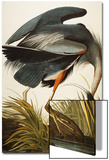 Great Blue Heron (Ardea Herodias), Plate Ccxi, from 'The Birds of America' Posters by John James Audubon