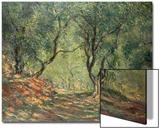 Olive Grove in the Moreno Garden, 1884 Poster von Claude Monet