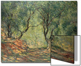 Olive Grove in the Moreno Garden, 1884 Poster by Claude Monet