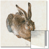 Hare, 1502 Prints by Albrecht Dürer