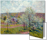 Spring in the Environs of Paris, Apple Blossom, 1879 Poster by Alfred Sisley