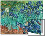 Irises, 1889 Prints by Vincent van Gogh