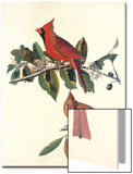 Cardinal Grosbeak Art by John James Audubon