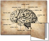 Vintage Brain Map Anatomy Posters by  NaxArt