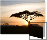 A Acacia Tree in the Serengetti Prints by Ben Horton