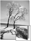 Trees in the Snow Posters by Alfred Eisenstaedt