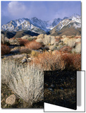 Mountains and Desert Flora in the Owens Valley, Inyo National Forest, California, USA Prints by Wes Walker