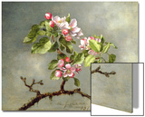 Apple Blossoms and a Hummingbird, 1875 Affiche par Martin Johnson Heade